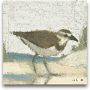 Beach Bird III - 8x8