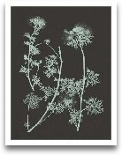 Mint & Charcoal ...<span>Mint & Charcoal Nature Study IV</span>