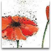 Not A California Pop...<span>Not A California Poppy III On White - 12x12</span>