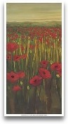 Red Poppies In Field I