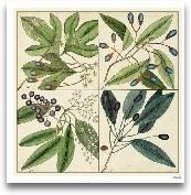 Catesby Leaf Quadrant I