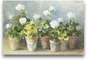 White Geraniums - 36x24