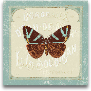 Parisian Butterfly  ...<span>Parisian Butterfly  II - 12x12</span>