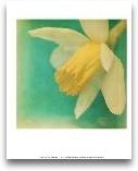 White Flowers V