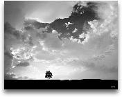 Lone Tree - 28x22