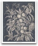 Vintage Fruit & ...<span>Vintage Fruit & Floral II</span>