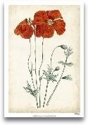 Tangerine Floral V