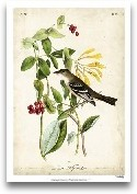 Audubon Bird &amp; B...<span>Audubon Bird &amp; Botanical II</span>
