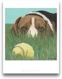 Dlynn's Dogs - Sunny