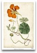 Tangerine Floral VI