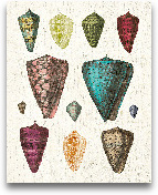 Colorful Shell Assor...<span>Colorful Shell Assortment II - 16x20</span>
