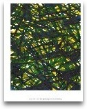 Green Thicket II