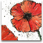Not A California Pop...<span>Not A California Poppy On White IV - 12x12</span>