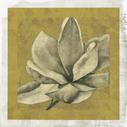 Ecru Magnolia II