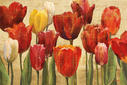 Tulip Fantasy on Cream