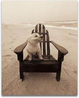 Life's A Beach preview