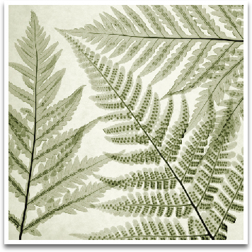 FERNS III preview