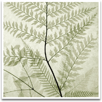 FERNS II preview