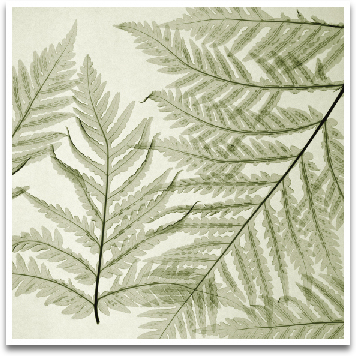 FERNS I preview