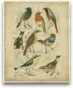Avian Gathering I