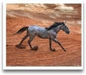 Blazing Horse II