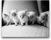 Five Kittens