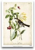 Audubon Bird & B...<span>Audubon Bird & Botanical II</span>