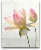 Double Water Lily